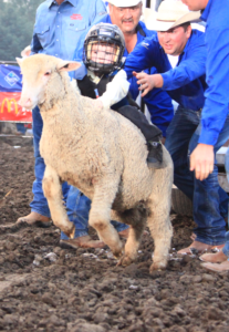 mutton busting1