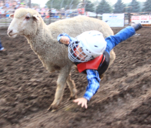 mutton busting2