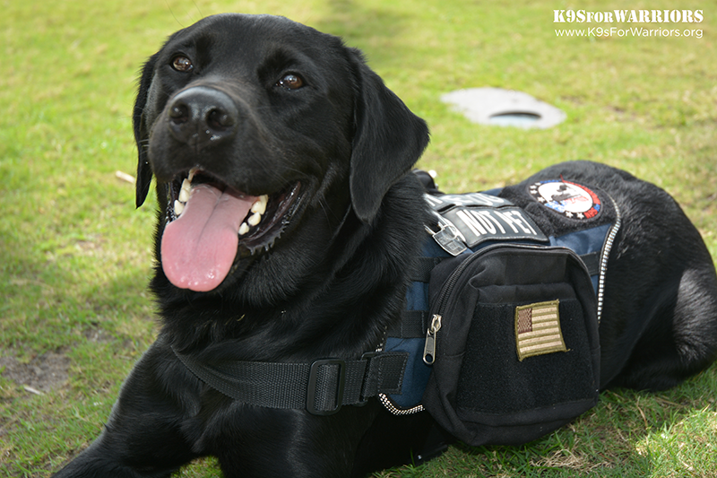 K9sForWarriors2015-03